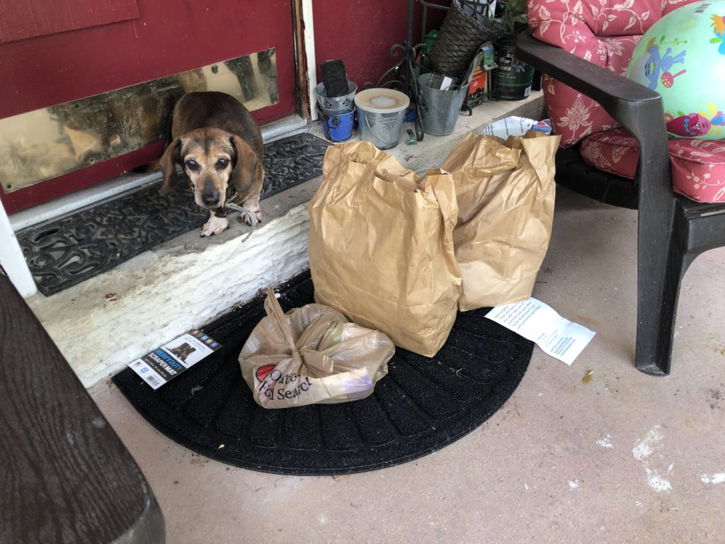 A Dachshund looks up, standing on the front step in front of a red door, next to three bags of groceries on the porch.